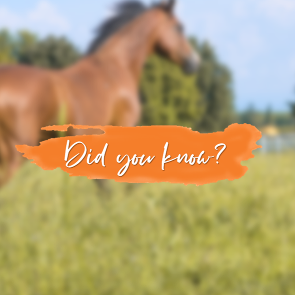 ATHLETIC MARES ARE BETTER BROODMARES