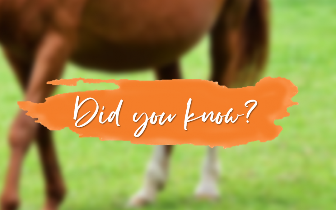 Are these the signs of foaling or just a colic?