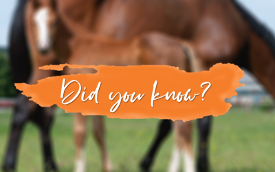 MARES CAN HAVE A FOAL FROM THE AGE OF 18 MONTHS